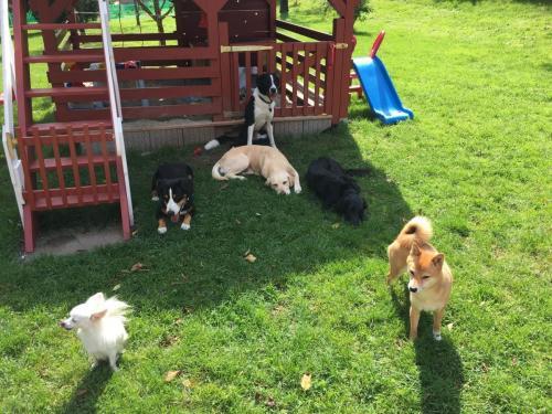 Unsere Batida mit Gianni, Thetis, Buddy, Cupido und Lucy