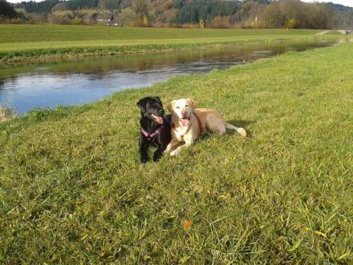 Eigene Hunde Batida & Luna