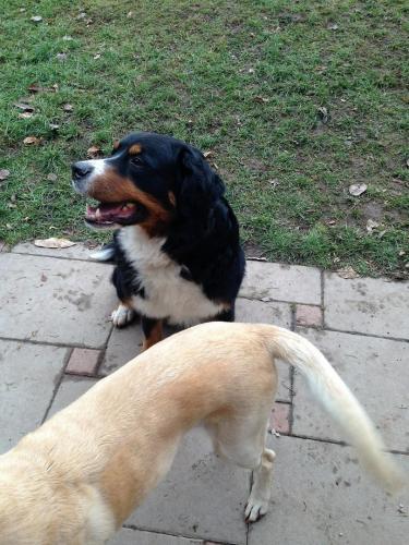 Gasthund Kessy