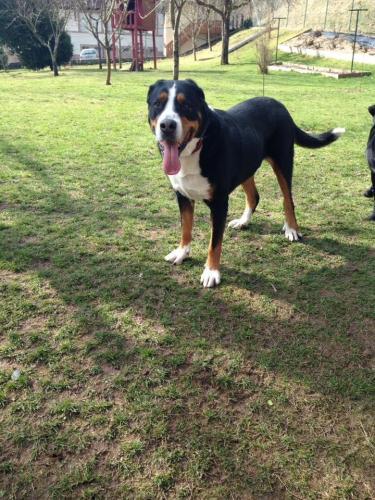 Gasthund Rocky