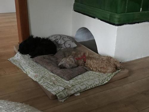 Gasthund Kati & Sissi