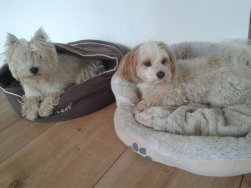 Gasthund Mila & Chicco