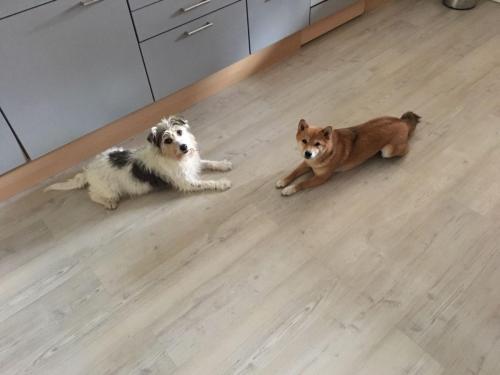 Gasthund Tessa & Thetis