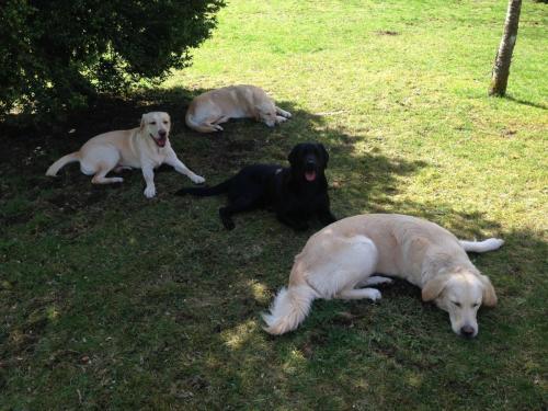 Gasthund Laika & Frau Klein mit Luna & Batida