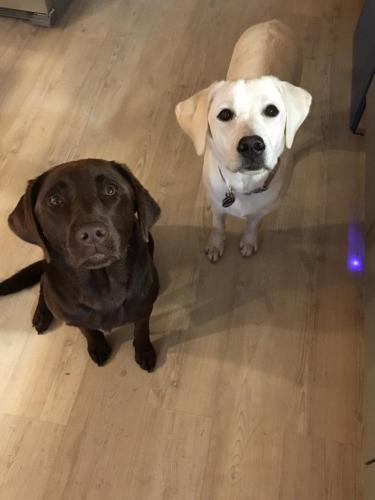 Gasthunde Kara & Lacey