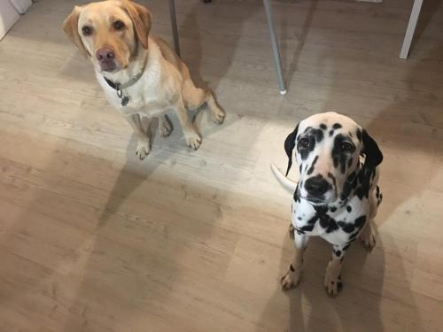 Gasthunde Elvis & Popcorn
